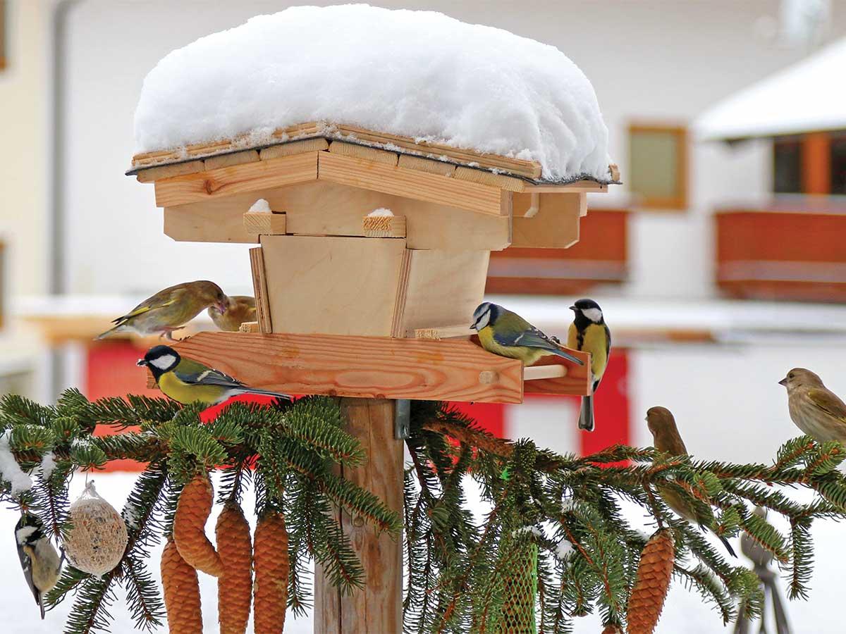 vtáčia búdka v zime