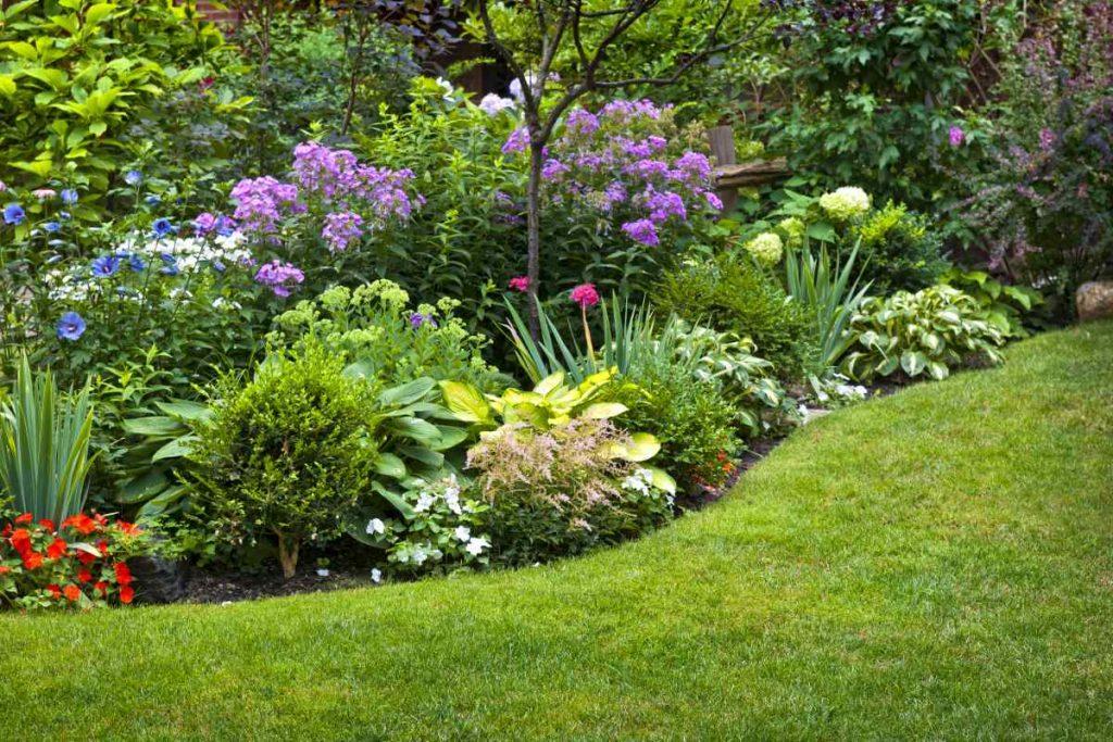 záhradné kvetiny