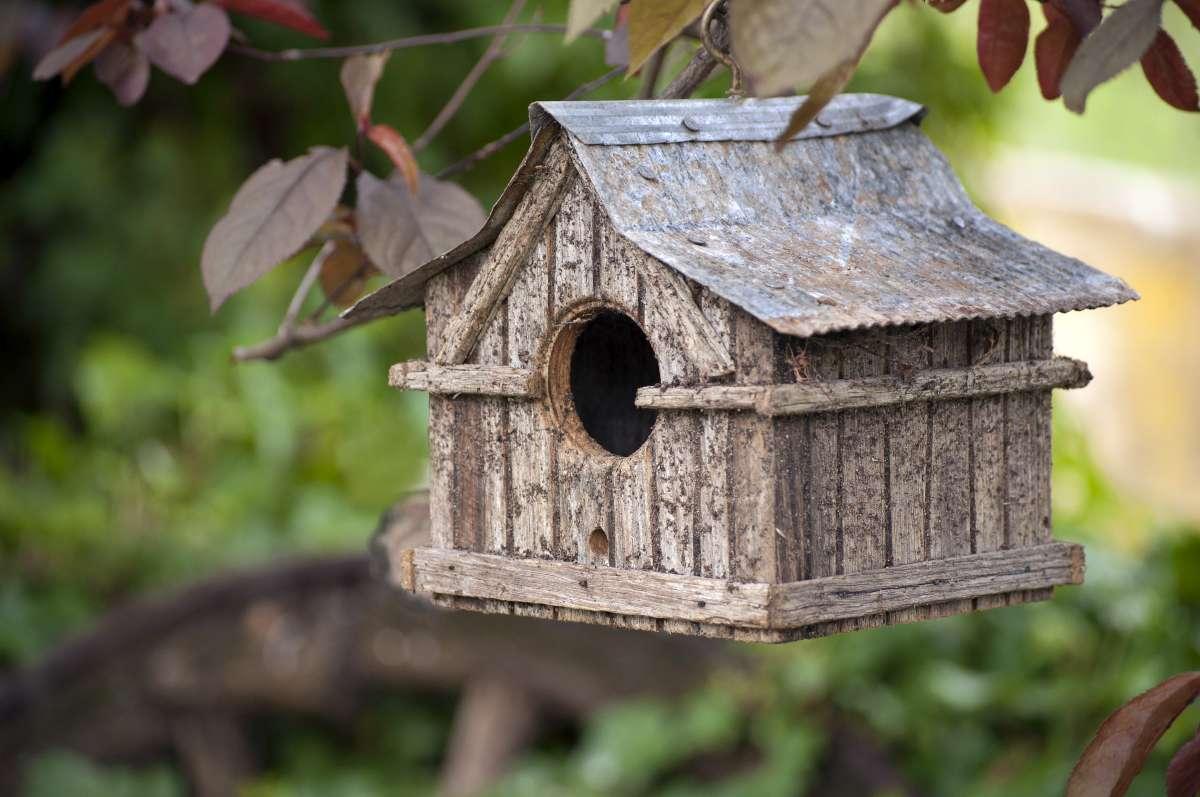vtáčia búdka zavesená na strome