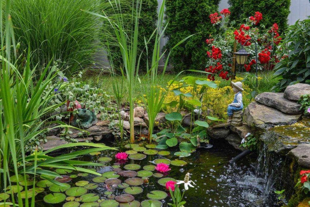 prírodné záhradné jazierko