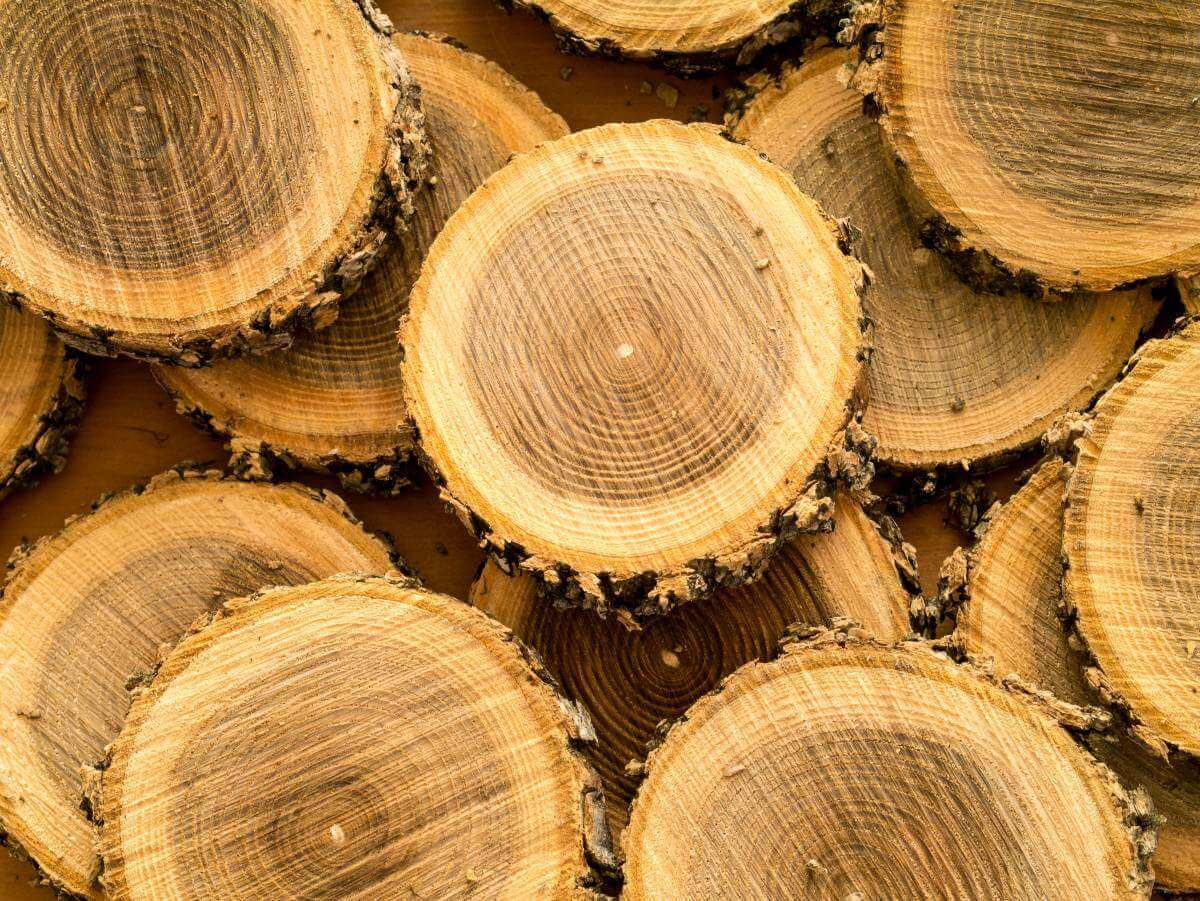 letokruhy dreva naukladané na seba
