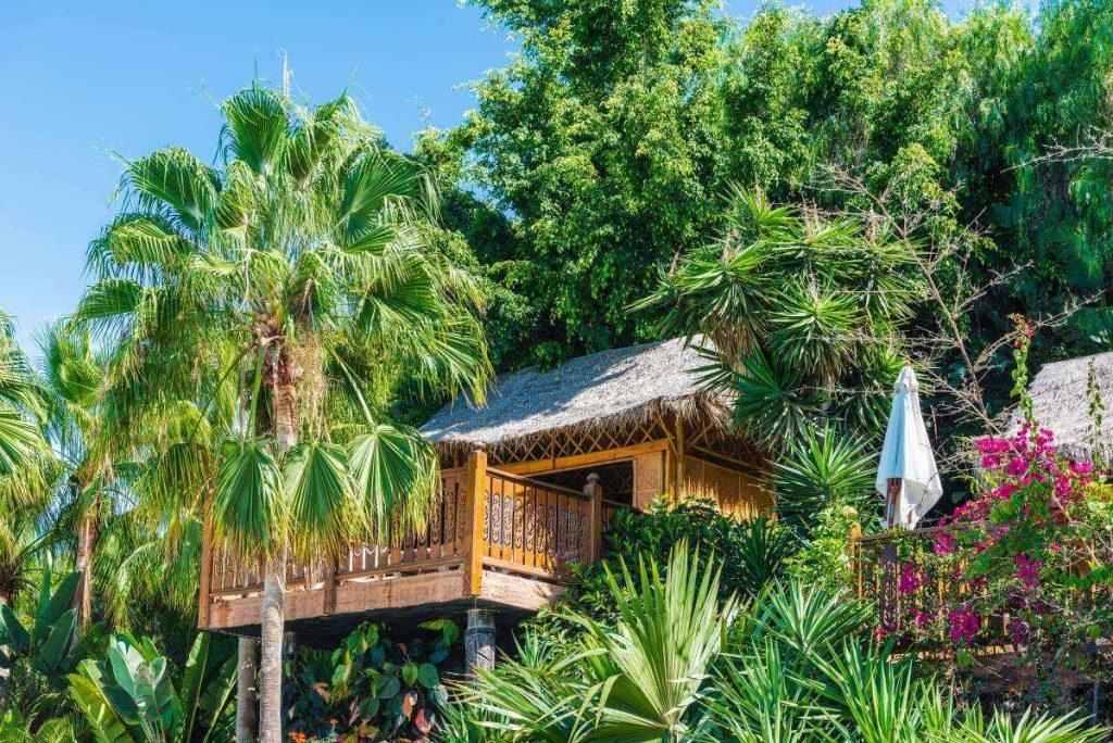 altánok medzi palmami