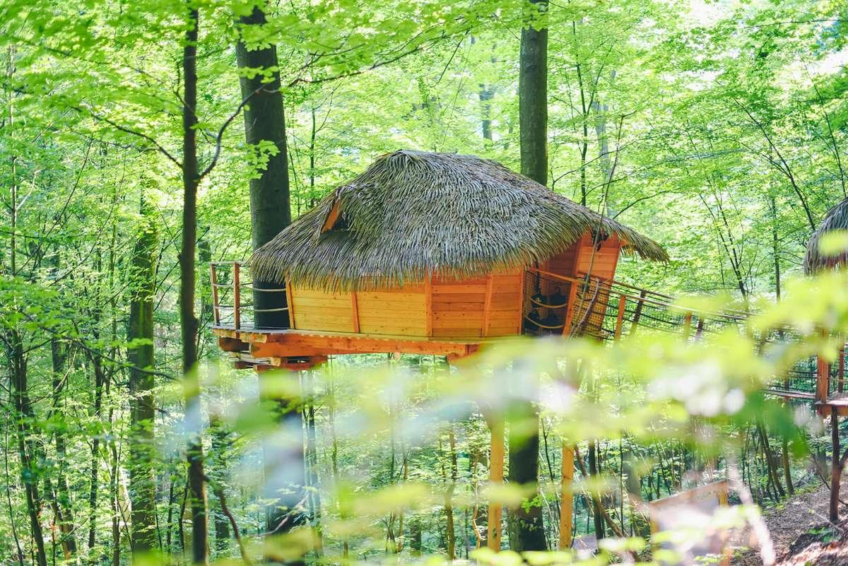 dom na strome v lese